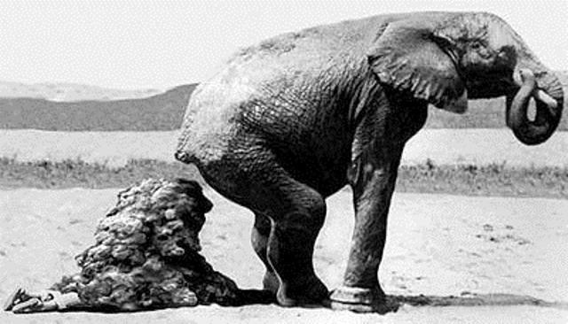 elefante_sin_modales
