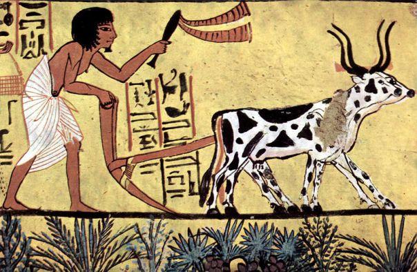 Una pintura de una tumba egipcia, aproximadamente de 1200 a.C.: Un par de bueyes labran un campo. En la naturaleza, el ganado vagaba a su aire en rebaños con una compleja estructura social. El buey, castrado y domesticado, consumía su vida bajo el látigo y en un estrecho redil, y trabajaba solo o en parejas de una manera que no era adecuada para su cuerpo ni para sus necesidades sociales ni emocionales. Cuando un buey ya no podía tirar del arado, era sacrificado. (Adviértase la posición encorvada del labriego egipcio, quien, de manera parecida al buey, pasaba su vida realizando un duro trabajo que oprimía su cuerpo, su mente y sus relaciones sociales).